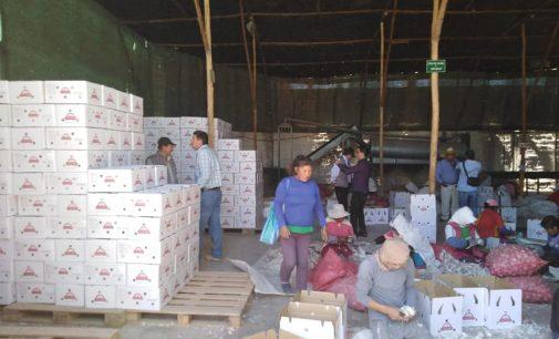 Autodema contribuye al desarrollo de los agricultores de Majes